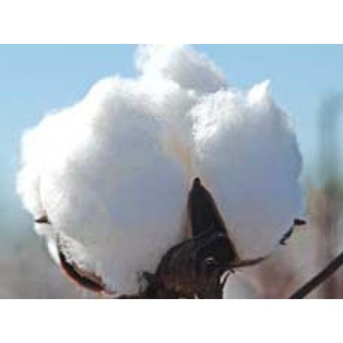 cotton culin plan ahead - 500×500