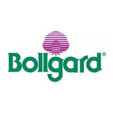 Bollgard Seeds