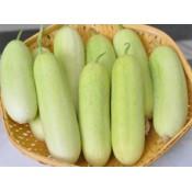 Cucumber Seeds (9)
