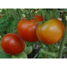 Ankur Hybrid Tomato ARTH Ranveer-(3054) (10g) vegetable seeds