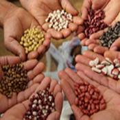 Field Crops Seeds (9)