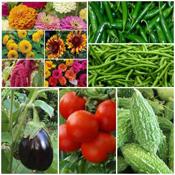 Vegetable Seeds (272)
