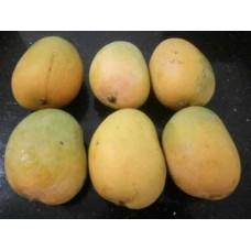 Organic Gavran Mango (Desi) - 1 Dozen