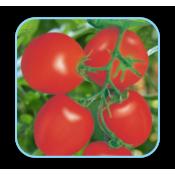 Tomato Seeds (19)