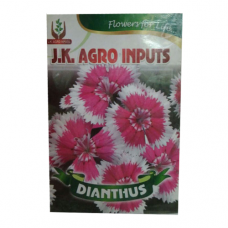 Dianthus Flower Seed