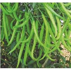 Nirmal Hybrid chilli Vegetable Seeds NCH-913 -10 GRM