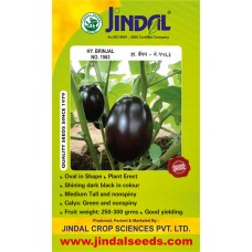 Jindal Brinjal Hybrid Seeds(baingan Seeds)-No.1563 -10GM