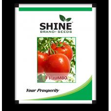 Hybrid Tomato Seeds - F1 Jumbo (10GM) (JUMBO01)