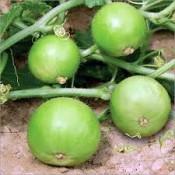 Tinda Seeds (2)